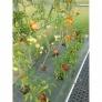 Zahradní skleník z polykarbonátu Gardentec Standard