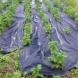 Zahradní textilie Agrotex - 1,6 x 50 m - 80 m2