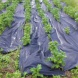 Zahradní textilie Agrotex - 1,6 x 25 m - 40 m2